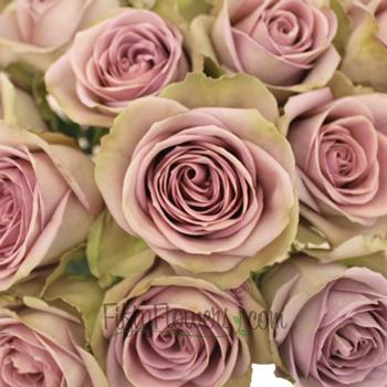 Amnesia Lavender Novelty Rose