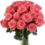 Salmon Pink Roses Amsterdam