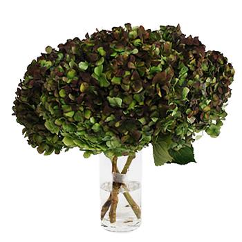 Antique Hydrangea Charcoal Flower