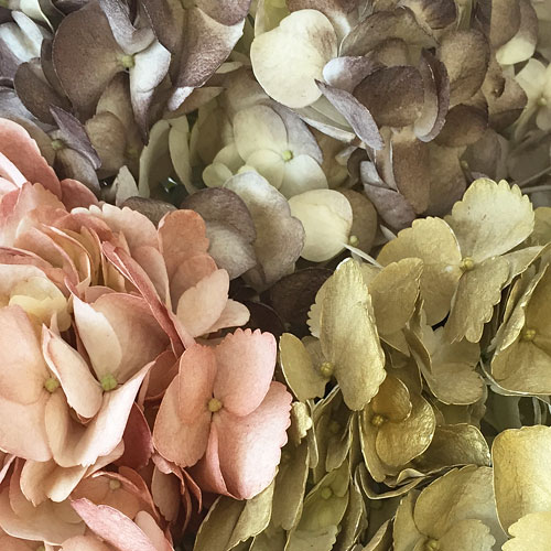Antique Earth Airbrushed Hydrangeas
