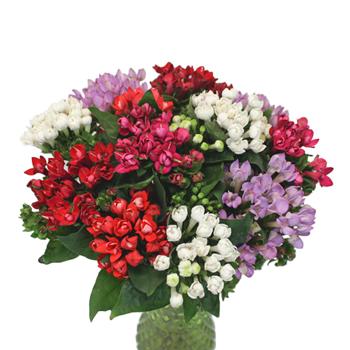Bouvardia Farm Mix Flower
