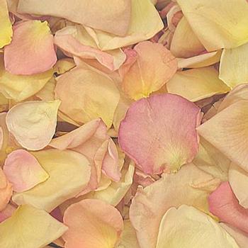 Assorted Pastels Freeze Dried Petals