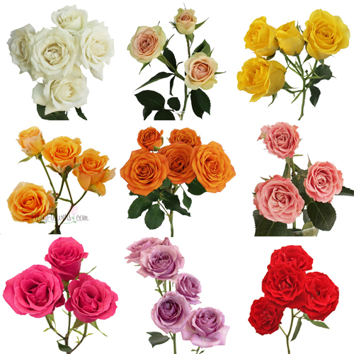 Choose Your Own Spray Bulk Roses