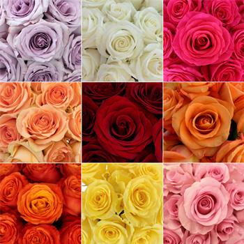 Wholesale Bulk Roses 50 Stems Your Colors