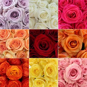 Wholesale Bulk Roses 200 Stems Your Colors