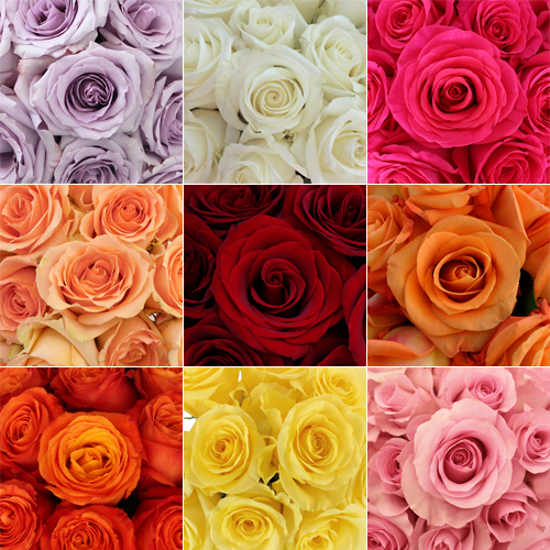 Wholesale Bulk Roses 125 Stems Your Colors