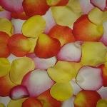 Buy Bulk Choose Your Own Colors Rose Petals
