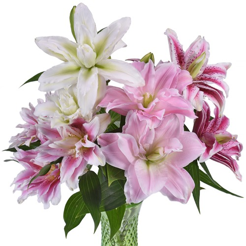 Assorted Rose Lily