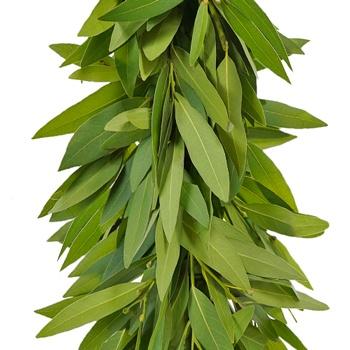 Bay Leaf  Garland