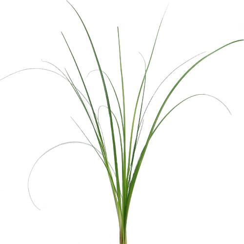 Bear Grass Greenery