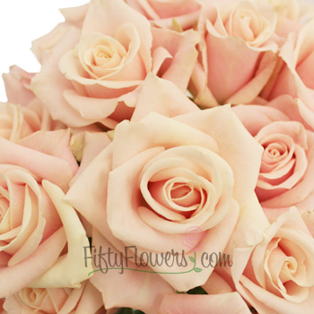 Ballet Blonde Sweetheart Roses
