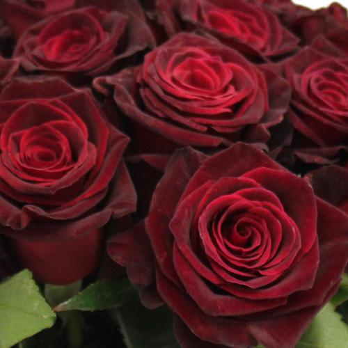 Black Bacarra Red Rose