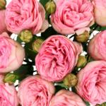Peony Rose Bridal Piano