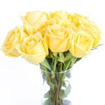 Yellow Rose Gold Strike