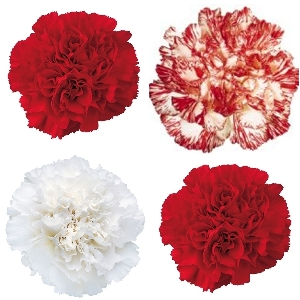 Christmas Pack Carnation Flowers