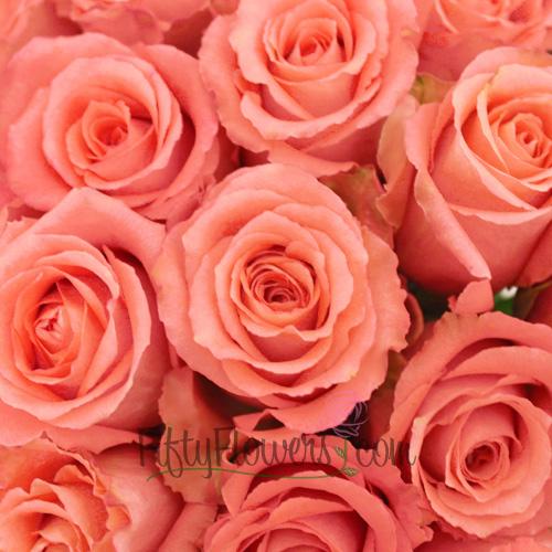 Classic Duett Salmon Pink Rose