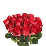 Fresh Cut Roses Bicolor Yellow and Red High Society