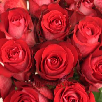 Corrida Raspberry Red Rose