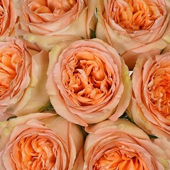 Country Home Garden Rose