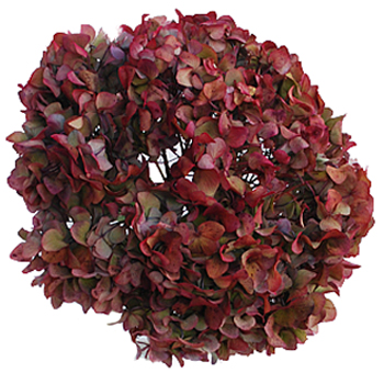 Cranberry Antique Enhanced Hydrangea