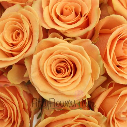 Cumbia Peach Rose