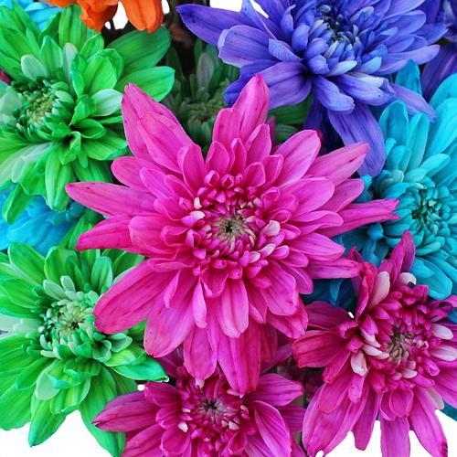 Hot Enhanced Cushion Bulk Flowers