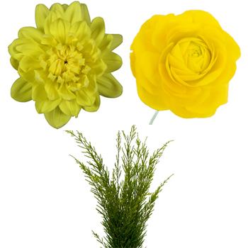 DIY Dahlias and Ranunculus Combo Pack