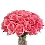 White Rose Akito