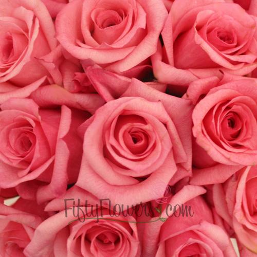 Pink Dark Engagement Rose