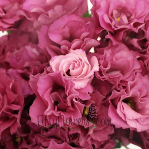 Raspberry Pink Lisianthus Flower for June to September Delivery
