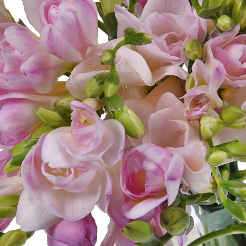 Honeymoon Designer Freesia Flower
