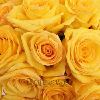 Dejavu Golden Yellow Rose
