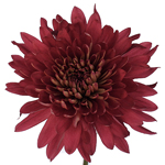 Fall Terracotta Flower