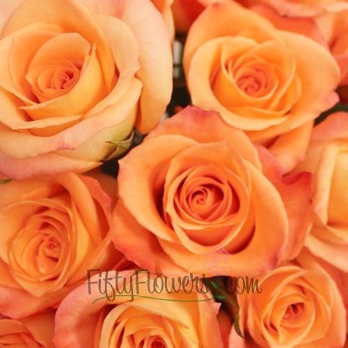 Donna Peach Rose
