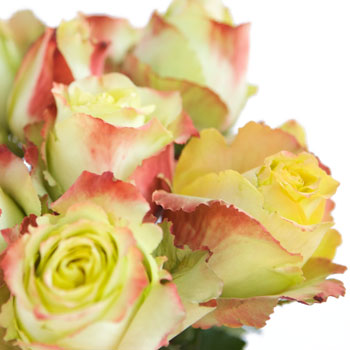 Antique Green Rose Zazu