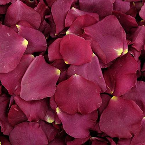 Eternal Love Dried Rose Petals