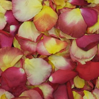 Fall Wedding Rose Petals