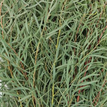 Feather Wedding Eucalyptus Greenery