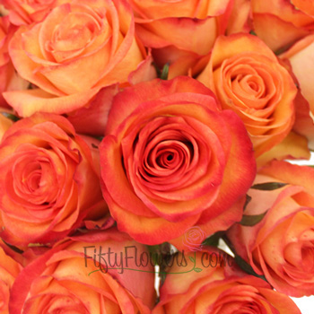 Orange Sunset Fidji Rose
