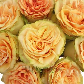 Finesse Sunrise Peach Rose
