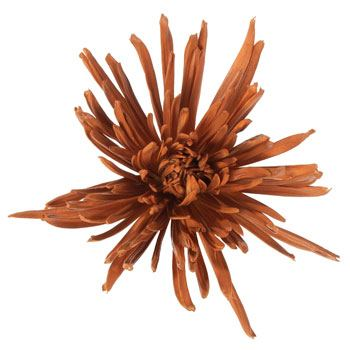 Glitzy Gold Airbrushed Tinted Spider Mum