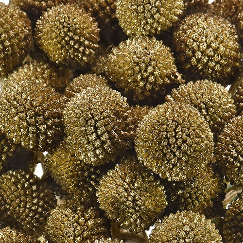 Craspedia Billy Balls Gold Flower
