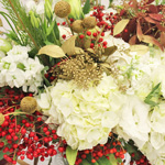 Christmas Lilies, Snaps & Statice Combo Pack