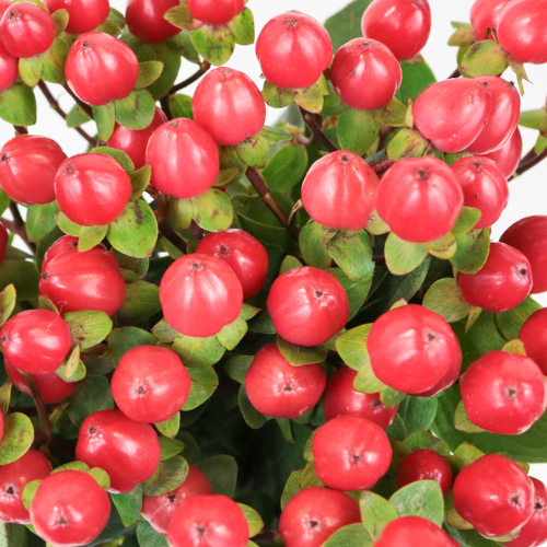 Red Designer Hypericum Berries