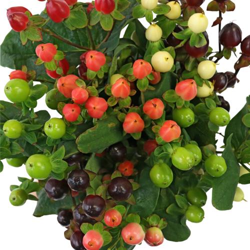 Designer Assorted Hypericum Berries