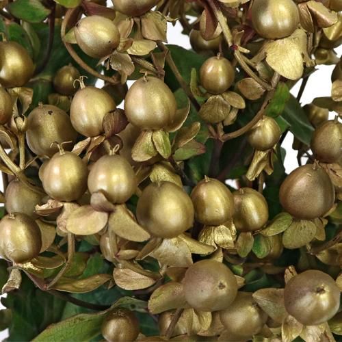 Enhanced Gold Designer Hypericum Berries