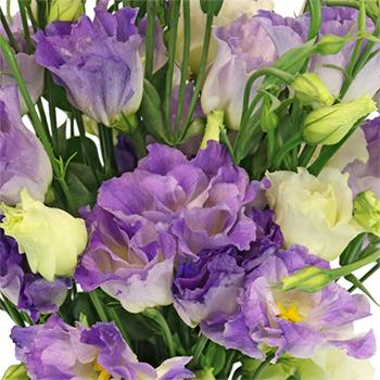 Hues of Lavender Lisianthus Flower for June to September Delivery
