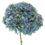 Antique Green Hydrangea Flower