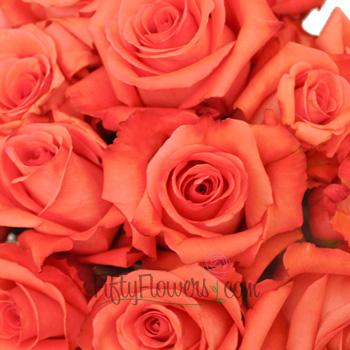 Impulse Coral Orange Roses