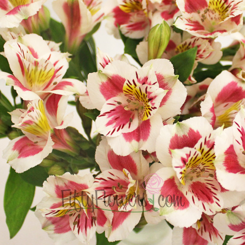 Wine and White Peruvian Lilies